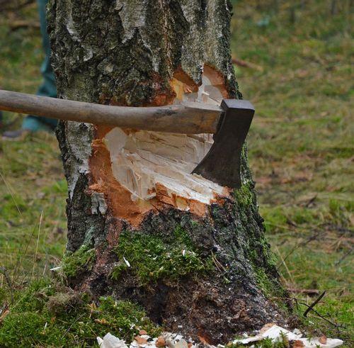Nieruchomość Wycinanie drzew - jak uchronić drzewa przed usunięciem?